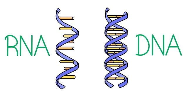 DNA nedir
